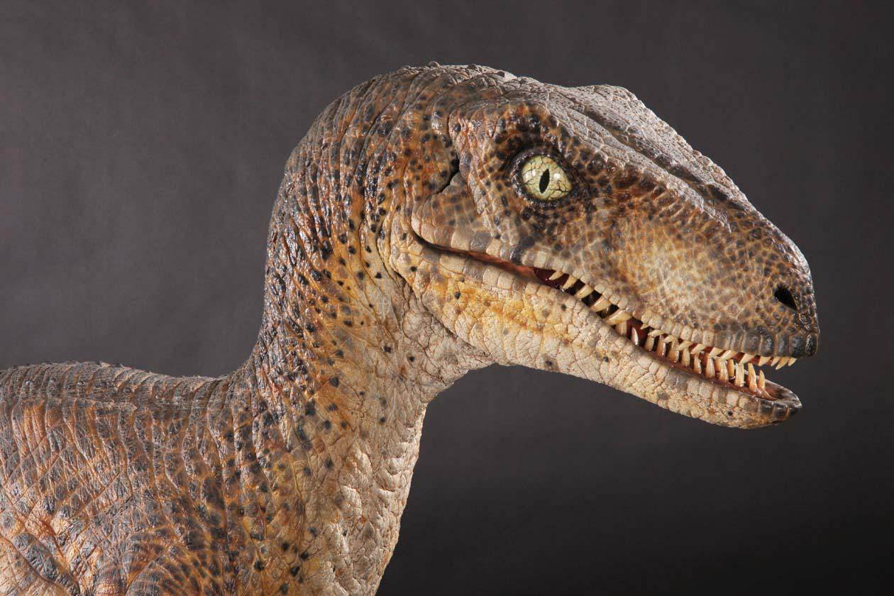 Il Velociraptor