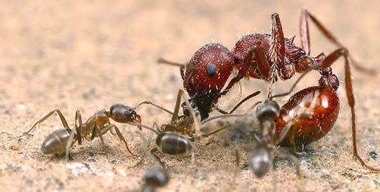 Noi e le formiche
