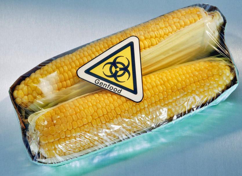 Il mais OGM uccide