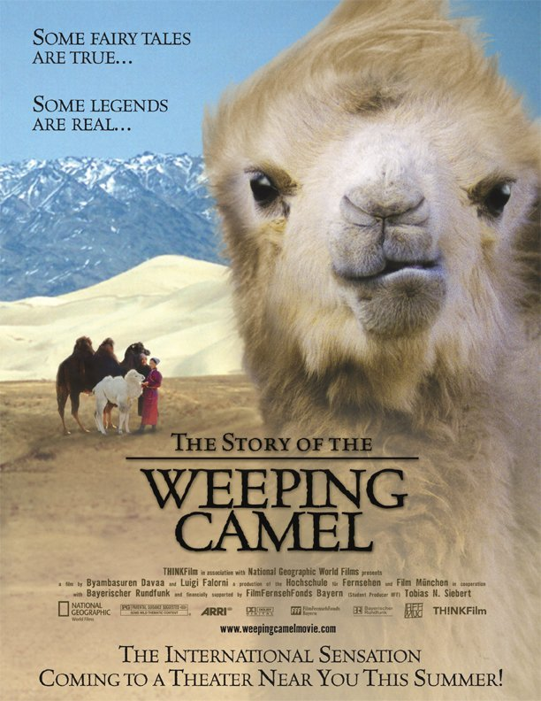 La storia del cammello che piange
