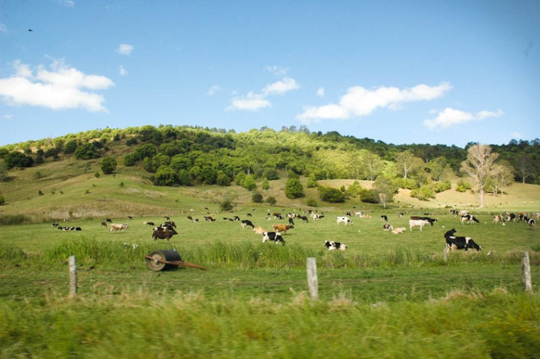Paesaggio tipico della campagna australiana