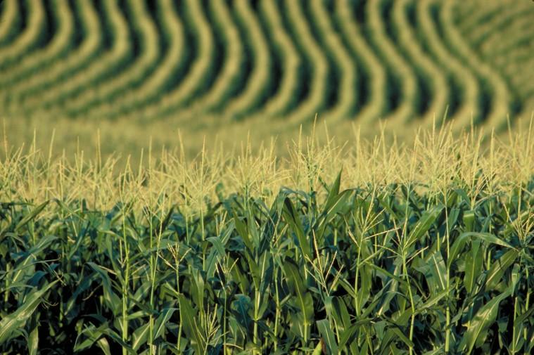 Etanolo e Biofuel