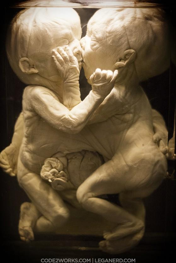 NEMO Phoetus