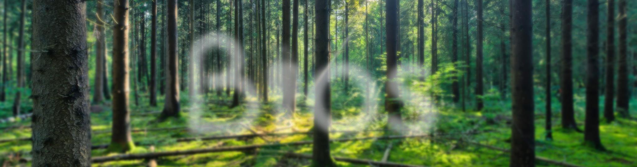 Bios, e rinasci albero