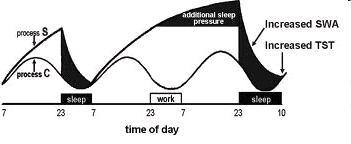 sonno-modello-di-borbely