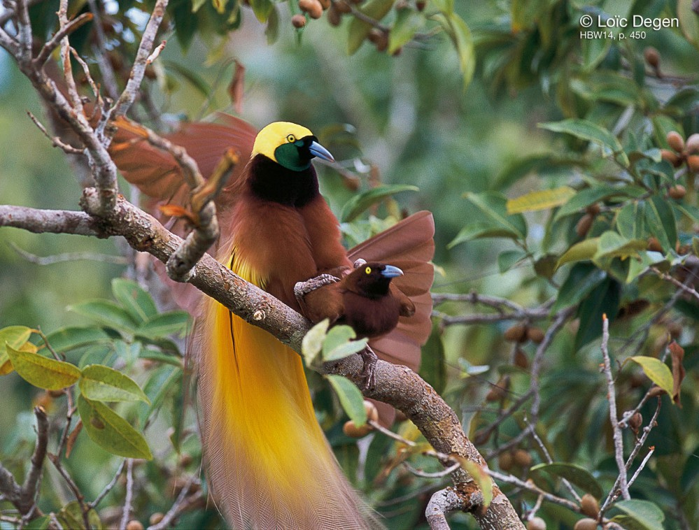 par-birds