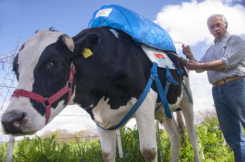 Lo zaino raccogli-scoregge per mucche