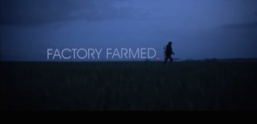 Cortometraggio: Factory Farmed