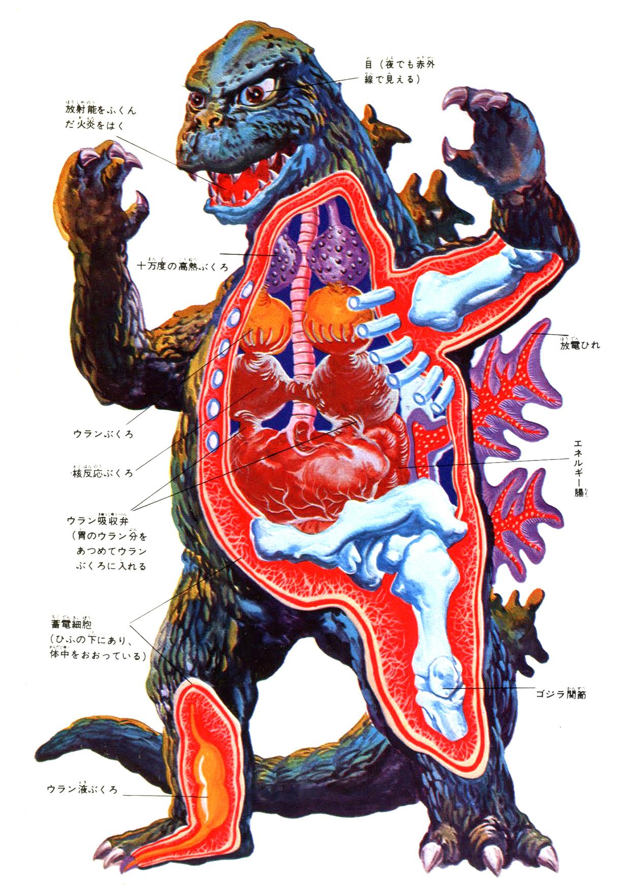 L'Anatomia Impossibile di Godzilla
