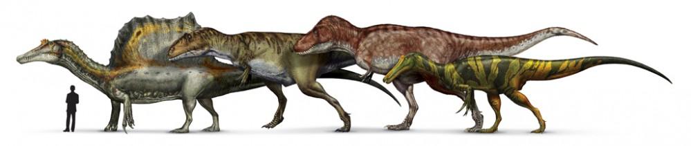 confronto-dimensionale-tra-spinosauro-e-altri-teropodi---disegni-D.-Bonadonna-Prehistoric-Minds