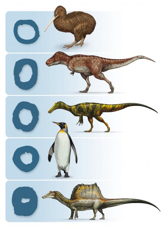 confronto-sezioni-ossa---disegni-D.-Bonadonna-Prehistoric-Minds