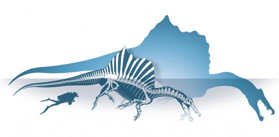 07---ricostruzione-scheletrica-spinosauro---foto-M.-Auditore-_-PrehistoricMinds