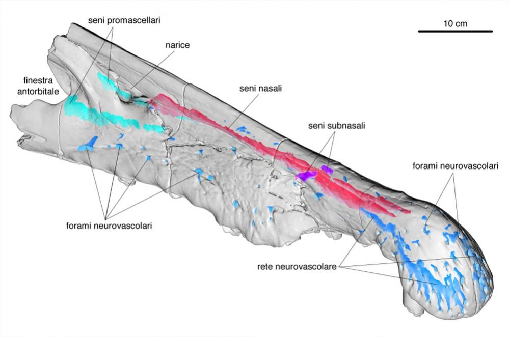 12-rendering-della-TAC-allo-spinosauro-MSNM-V4047-immagine-di-D.-Iurino