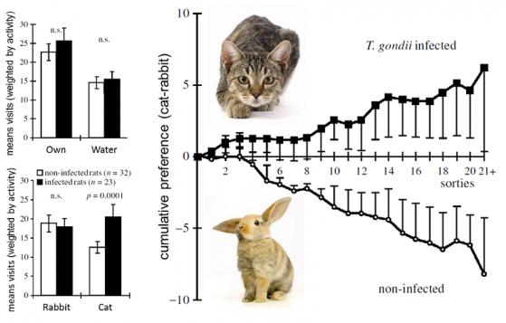 SN: media delle visite alle zone durante la sessione. DX: sulle Y le entrate nella cella con l'odore del felino meno le entrate in quella del coniglio, in X le varie uscite.