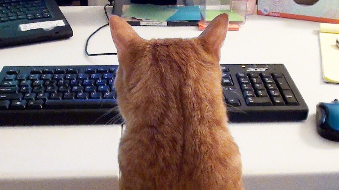 Lavorare da casa... con i gatti