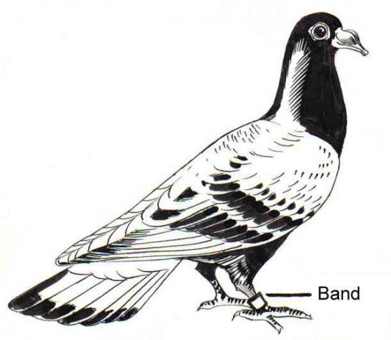 Carrier_Pigeon_PSF