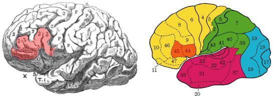 A destra, evidenziato, l' area descritta da Broca, a sinistra, in arancione, l' Area di Broca moderna