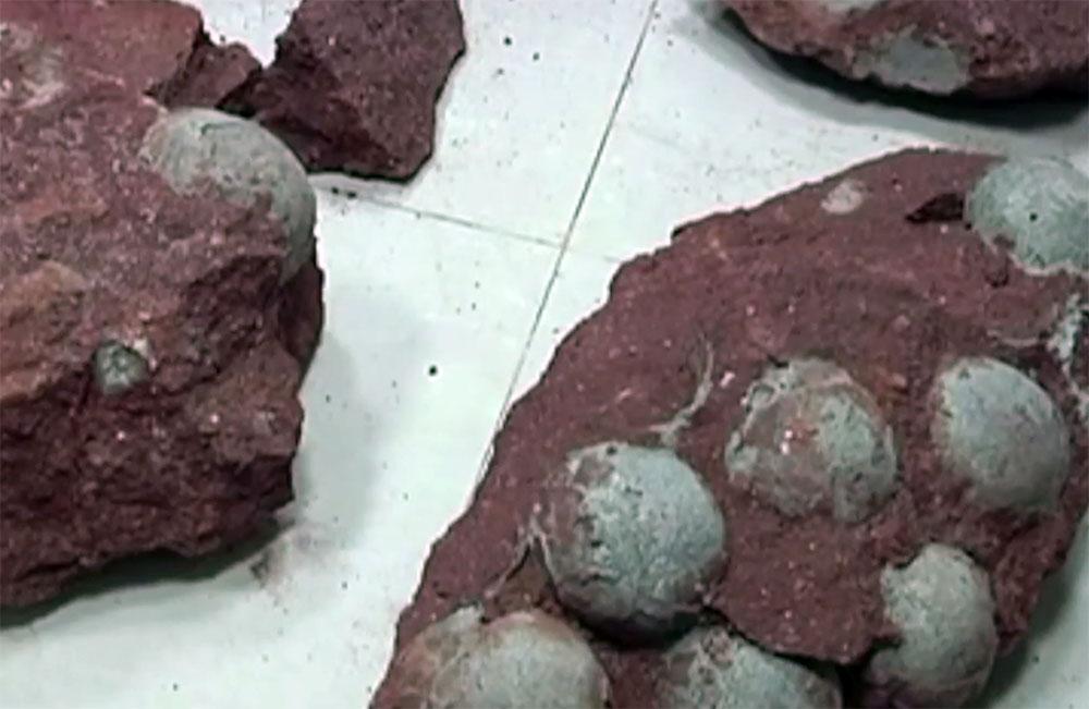 Uova di Dinosauro Giganti ritrovate in Cina