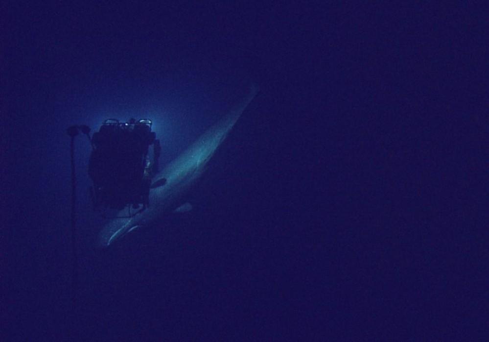 sperm-whale-gallery-13