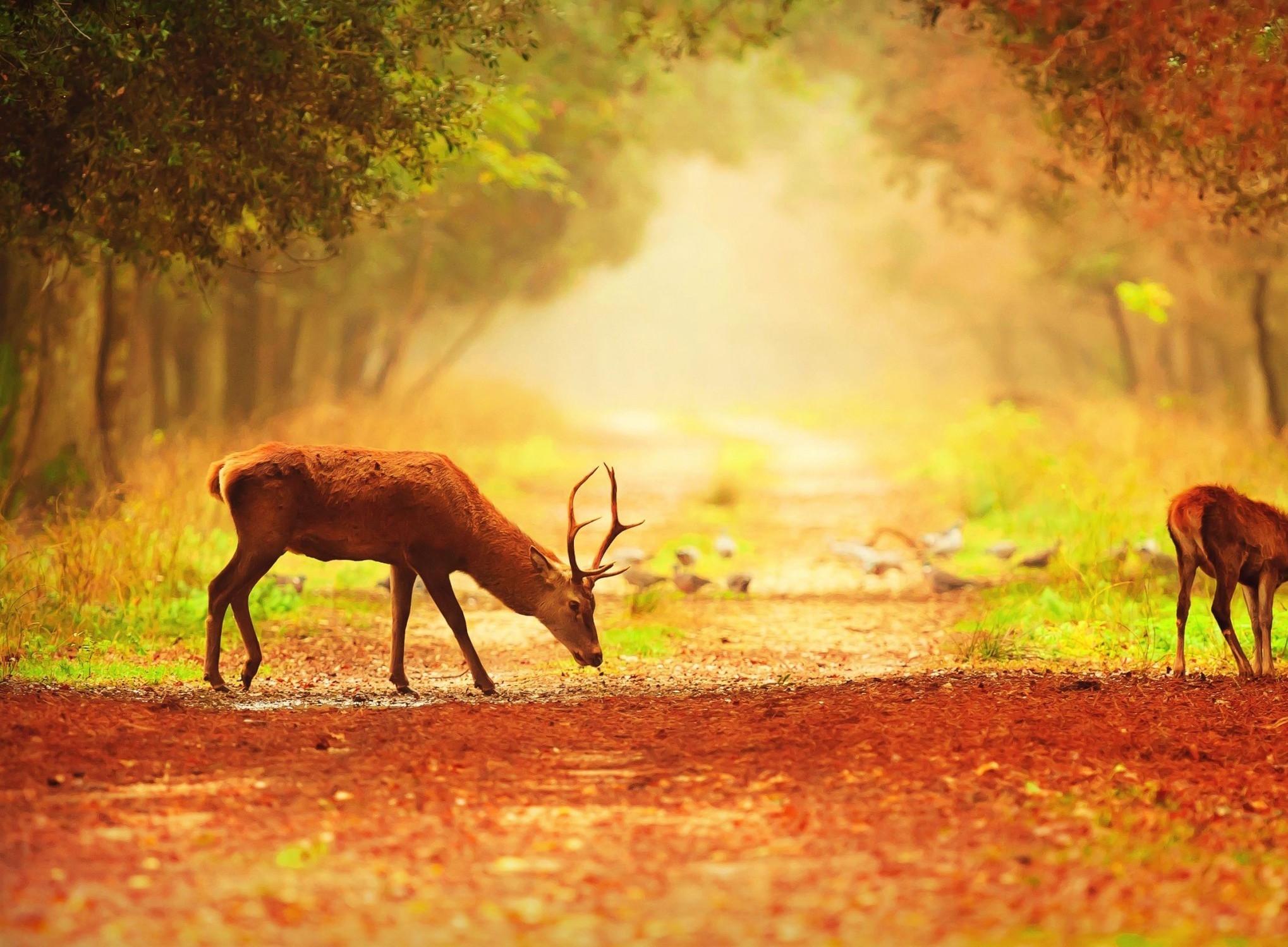 La caccia ai cervi