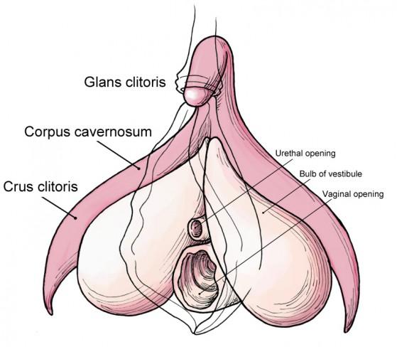 Gli orgasmi femminili