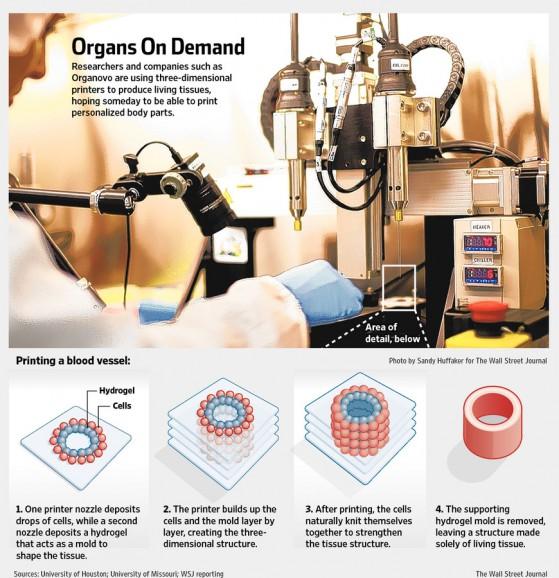 Stampa 3D di organi