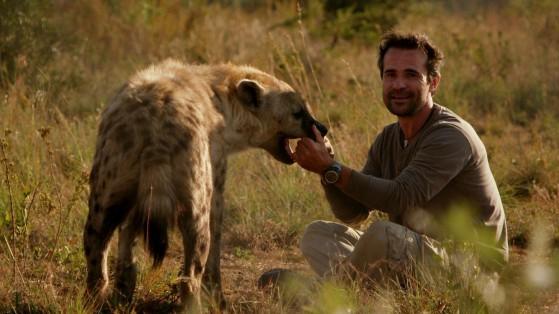 Qual è la iena tra i due?