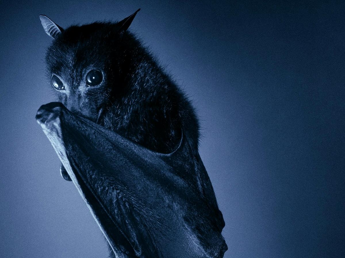 Pipistrello quanto sei bello