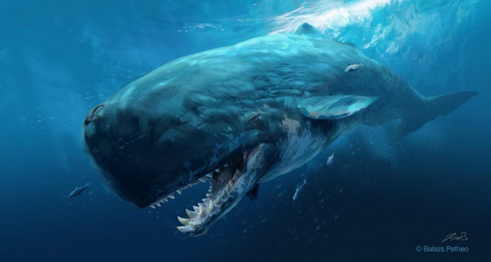 prehistoric_mammals___livyatan_melvillei_by_balcsika-d79x53f
