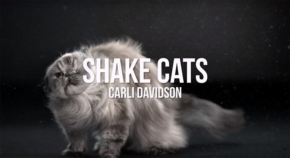 shakecats