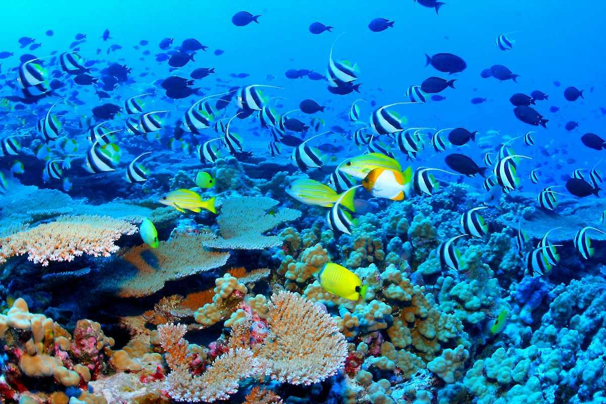 Un robot a guardia della barriera corallina