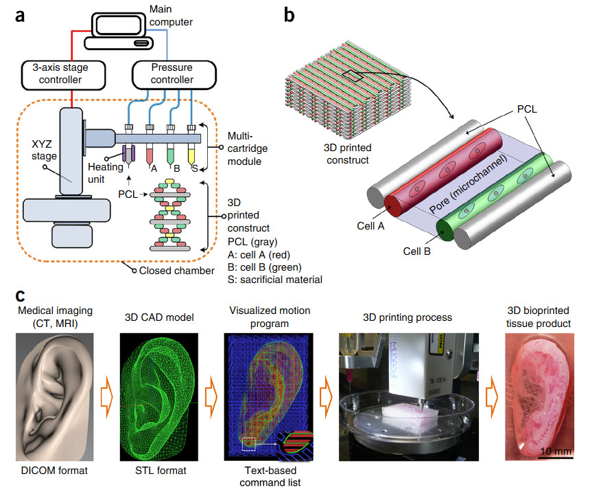 3d-printed-tissues2