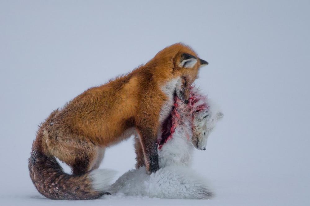 Wildlife Photographer of the Year, la galleria delle foto vincenti