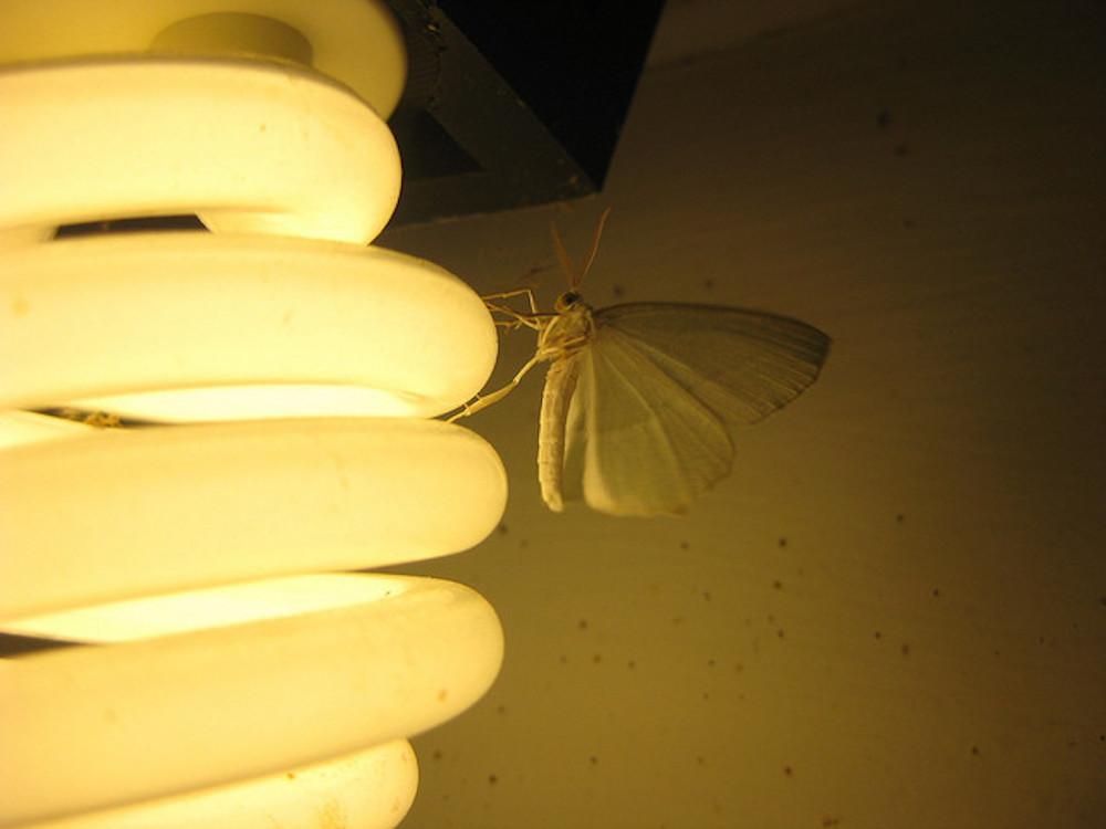 Quali lampadine attirano meno insetti?