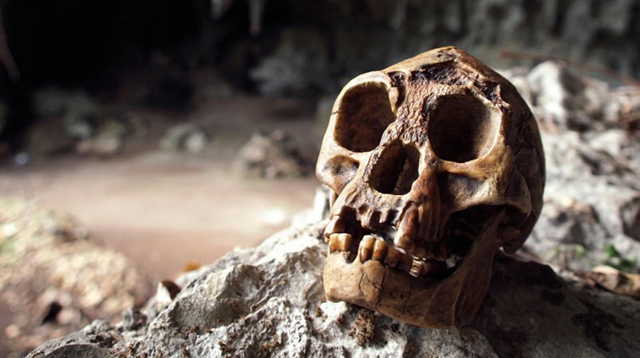 """Gli umani hanno davvero ucciso gli """"hobbit""""?"""