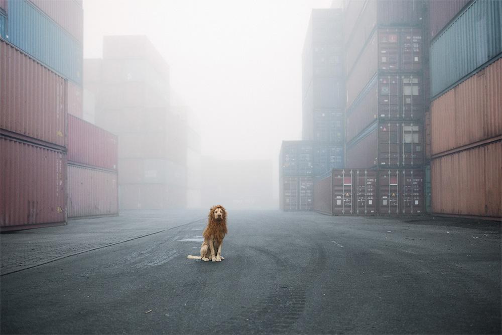 Tschikko, il cane abbandonato che diventò un leone