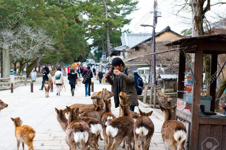 Gli educatissimi cervi di Nara