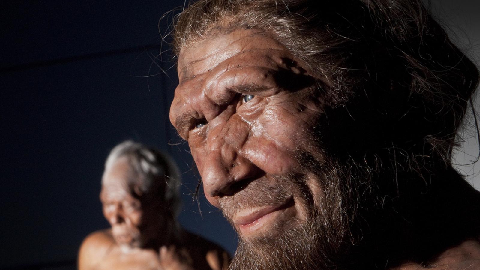 neanderthal herpes