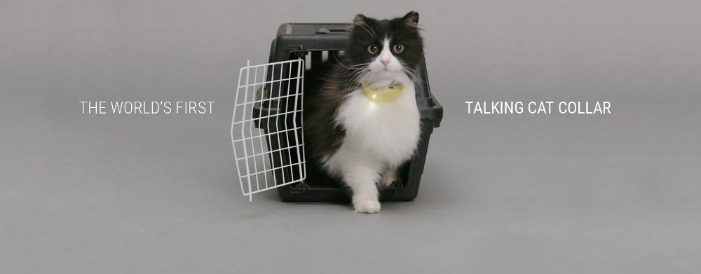 Catterbox, il collare che traduce il miagolio dei gatti