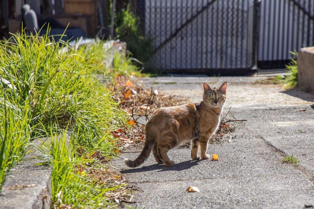 Cat Tracker, monitoraggio GPS per i gatti australiani