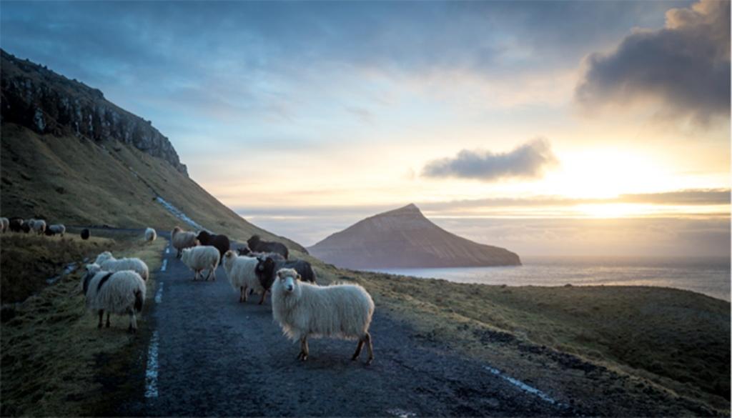 Sheep View 360, quando Google non arriva nelle Isole Far Oer