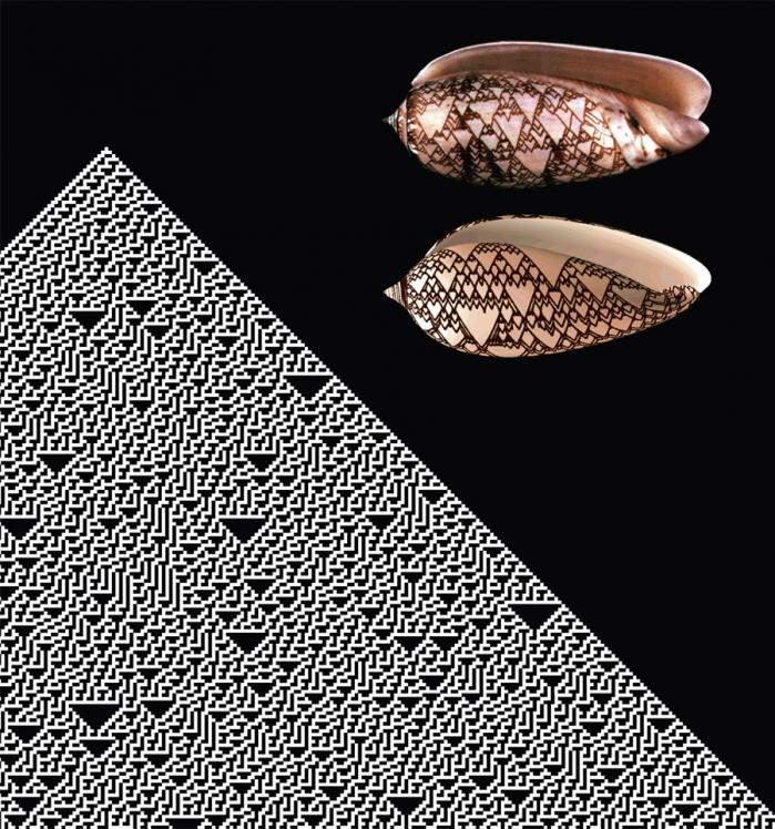 Il disegno sulla sinistra si produce eseguendo il più semplice automa cellulare non banale, la regola che, nella numerazione di Stephen Wolfram, occupa il trentesimo posto. Autore di Mathematica, il programma di calcolo e visualizzazione con cui è stato realizzato il disegno, Wolfram ha reso celebre questa regola nel suo libro A New Kind of Science (2002). Sulla destra in alto, la foto di una conchiglia tropicale (Conus textile). Sotto, il guscio della conchiglia simulato al computer.