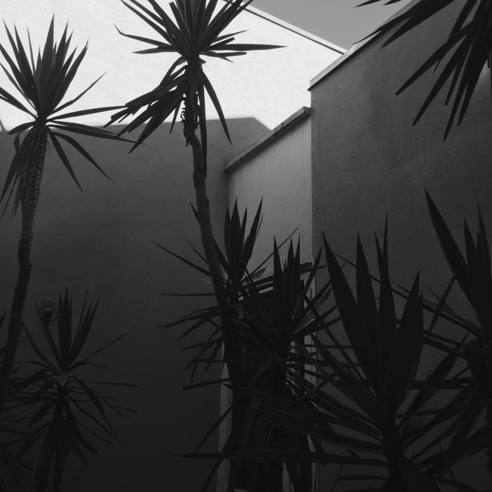 Un centimetro sopra: il cielo avrebbe prevaricato il resto dell'inquadratura e avrei avuto la metà inferiore nera. Un centimetro sotto: il muro dietro le foglie più alte avrebbe perso ogni dettaglio perché il telefono si sarebbe concentrato troppo sulla parte buia in basso. Risultato: da questa esatta posizione si riesce ad avere un po' di gamma, senza che lo sfondo diventi nero e senza che il muro illuminato diventi bruciato.