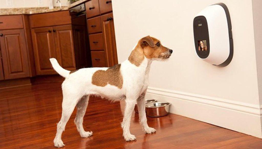 PetChatz, l'accessorio per videochiamare il proprio animale domestico