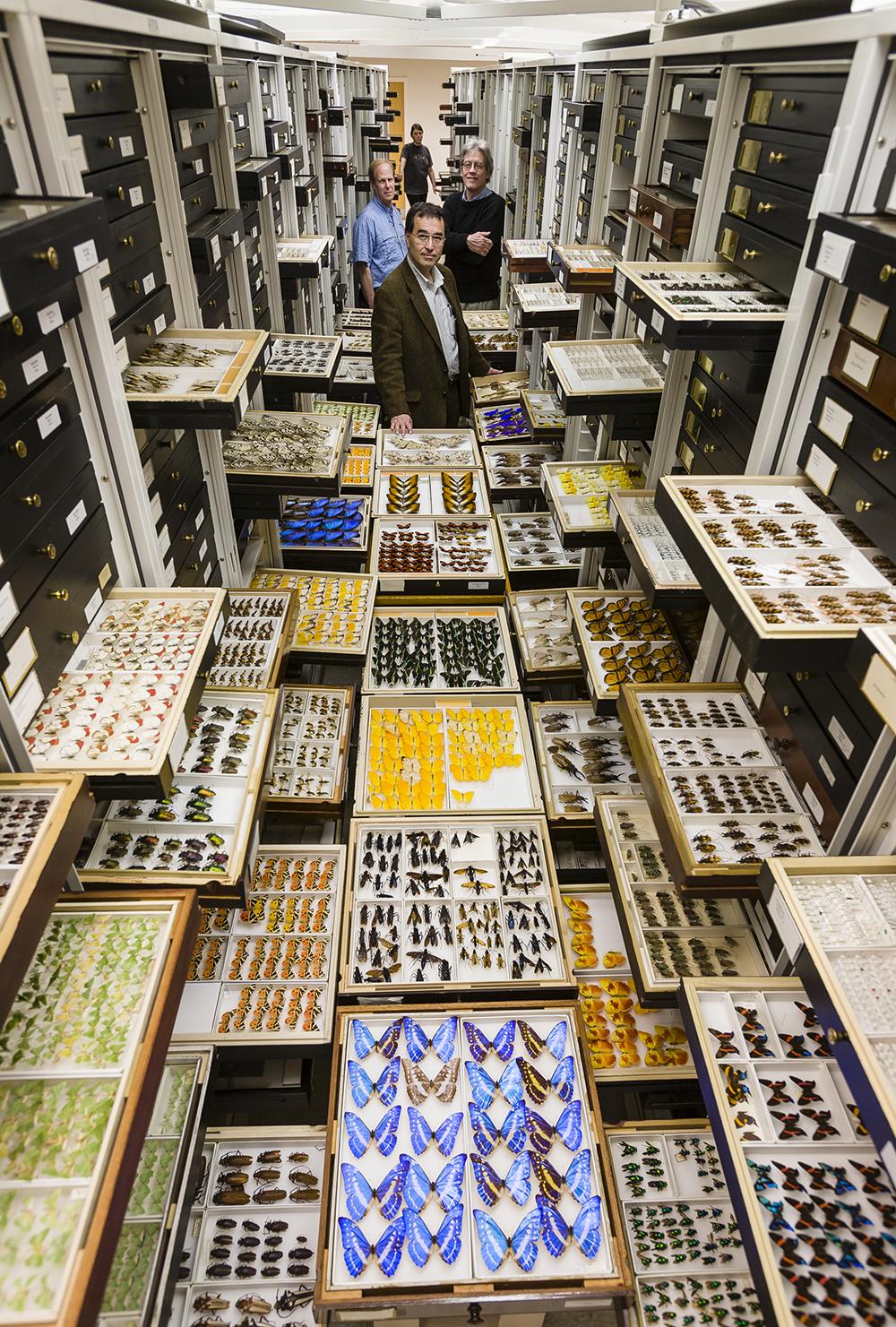 Gli archivi di un Museo di Storia Naturale