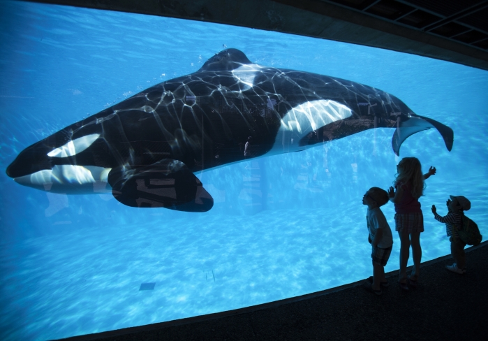 Young children get a close-up view of an Orca killer whale during a visit to SeaWorld in San Diego, California