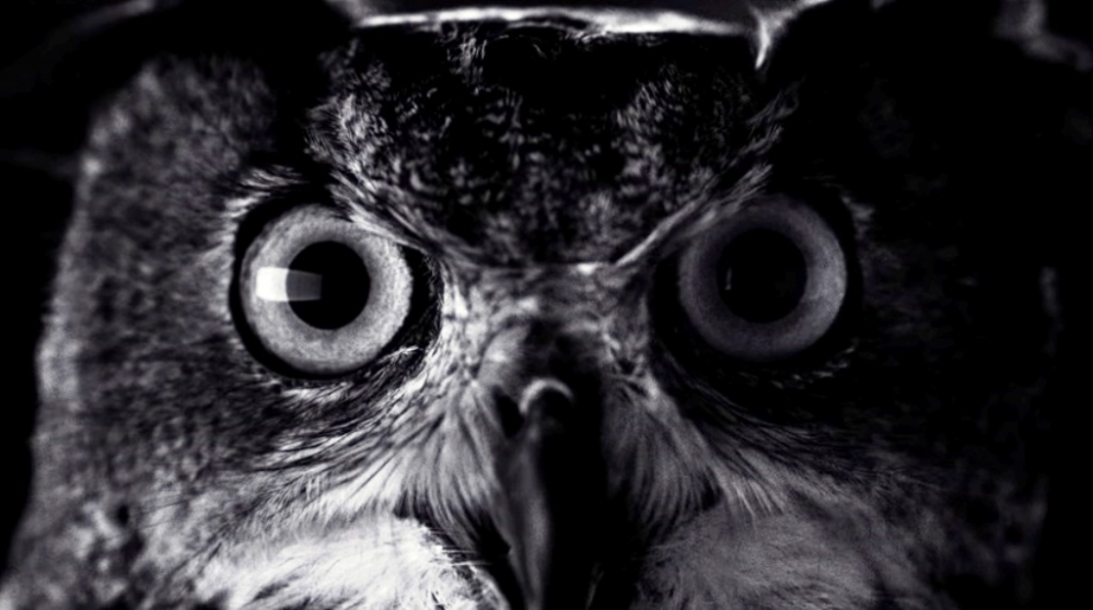 check-out-this-new-iphone-7-commercial-owl