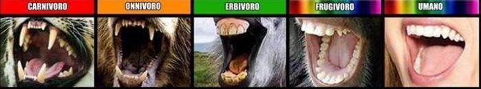 dentatura-onnivori-erbivori-carnivori