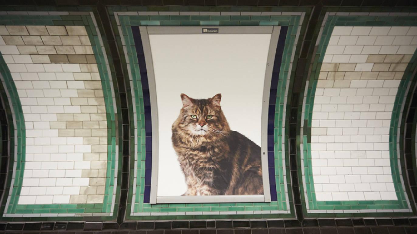 Londra, solo pubblicità con gatti in una stazione della metro