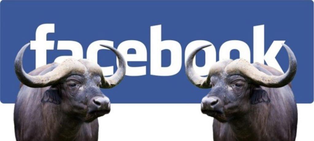 Facebook al lavoro per combattere la disinformazione
